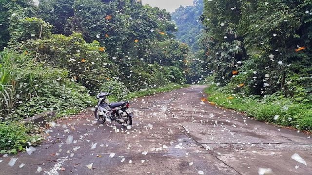 Cuc Phuong National Park overshadowed by butterflies