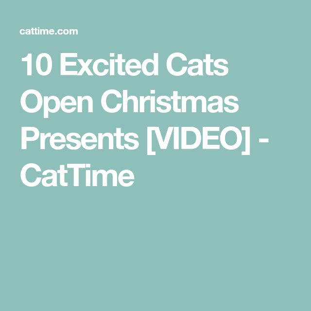 10 Excited Cats Open Christmas Presents [VIDEO] - CatTime