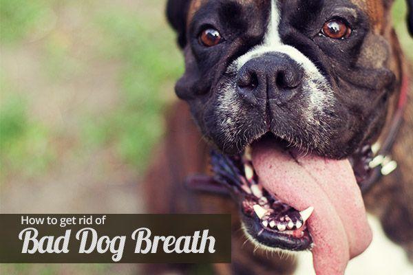 How to get rid of Bad Dog Breath - http://www.homesalive.ca/learning-centre/how-to-get-rid-of-bad-dog-breath.html