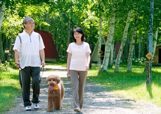 木漏れ日の中で犬の散歩をするシニア夫婦 11017002119 の写真素材 イラスト素材 アマナイメージズ 犬 散歩 イラスト 素材 イラスト