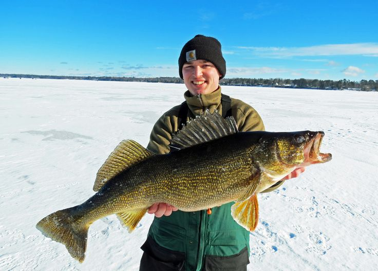 Beginner 39 s guide to chasing winter walleye on pinterest for Fall walleye fishing