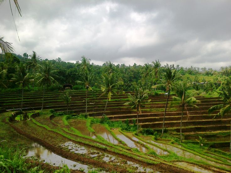 Cloudy in a rice field Buleleng, Panji North Bali.