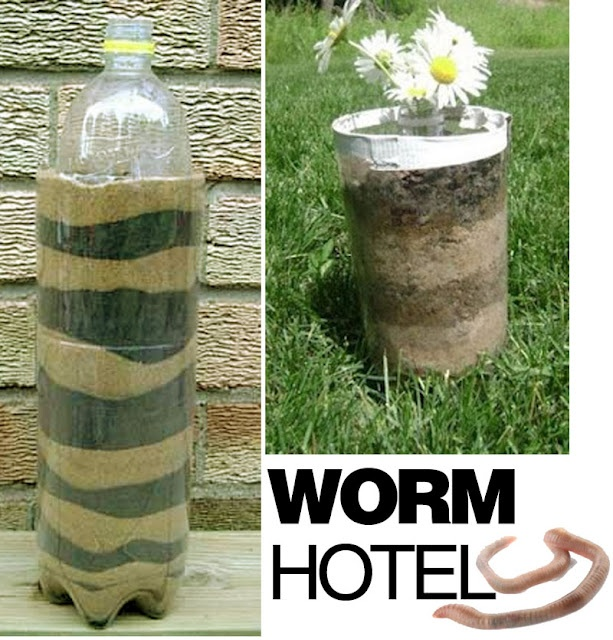 Observe the worm tunnel through dirt in this homemade Worm Hotel.