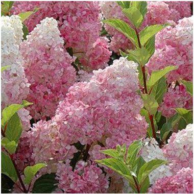 Kertészet Webáruház
