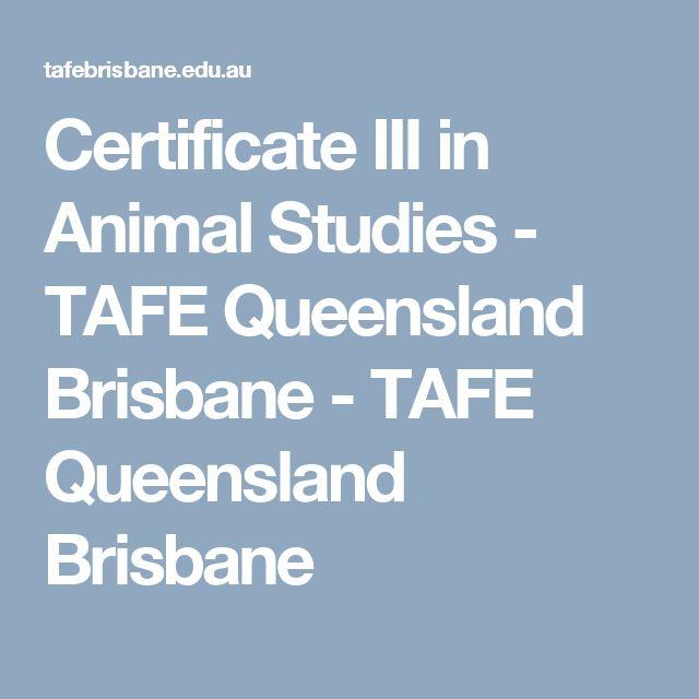 Certificate III in Animal Studies - TAFE Queensland Brisbane - TAFE Queensland Brisbane