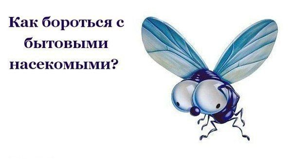 Как бороться с бытовыми насекомыми. 0