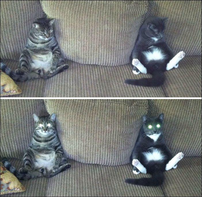 смешные коты | Сумасшедшие кошки, Глупые кошки, Смешные ...