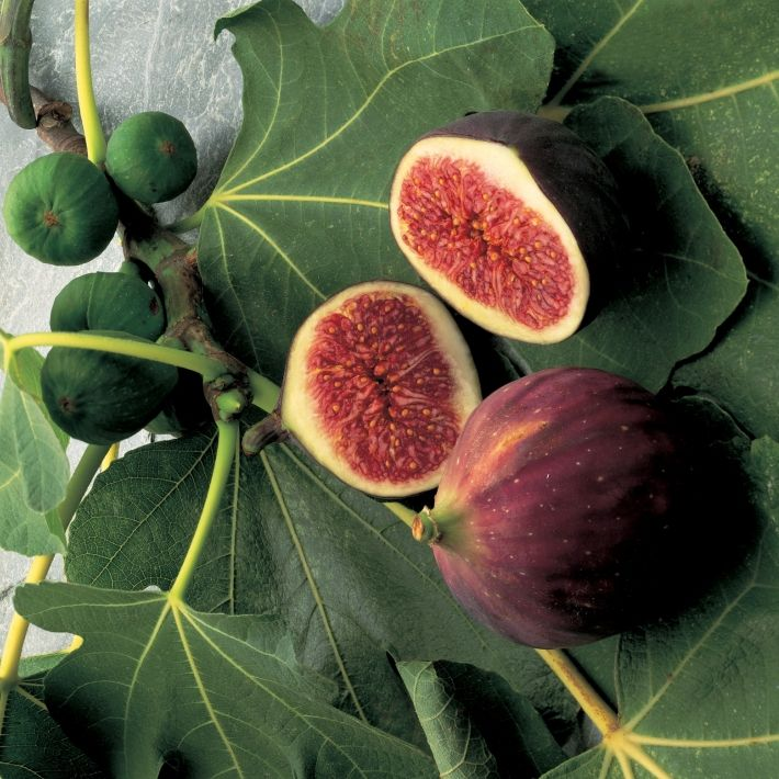 ... best images about Figs on Pinterest | Pistachios, Almonds and Fig bars