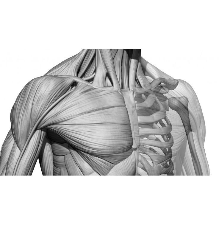 Ziemlich Menschliche Anatomie Studie Spiele Fotos - Menschliche ...