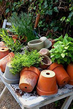 Le jArdiη✔ Gardening