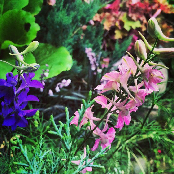 garden photo, garden,garten, бадан, гейхера