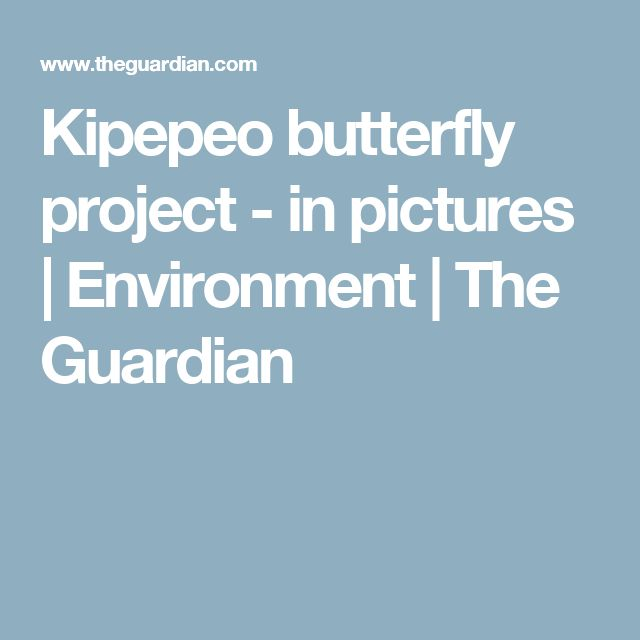Kipepeo butterfly project - in pictures | Environment | The Guardian