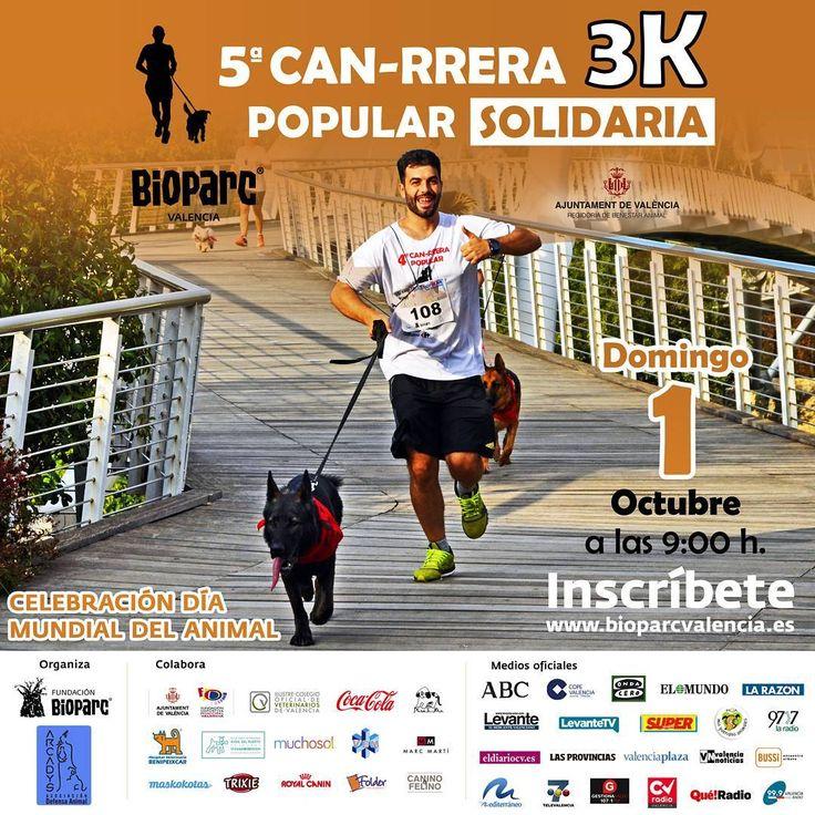 ¡Cartel oficial de la 5ª CAN-RRERA solidaria de València! #5CanrreraValencia Organizada por #BIOPARC y Arcadys para celebrar el #DiaMundialDelAnimal. Tendrá lugar el domingo 1 de octubre a las 9h. ¡Inscríbete y ven a correr con tu #perro! 😉 + Info link en BIO    #ExperienciasBioparc #runners #running #carrerasolidaria #AmIgers #IgersValencia #valenciagram #Valenciagramers #planesEnValencia #correrconperro #canicross #Valenciagrafias #igValencia #igersBioparc