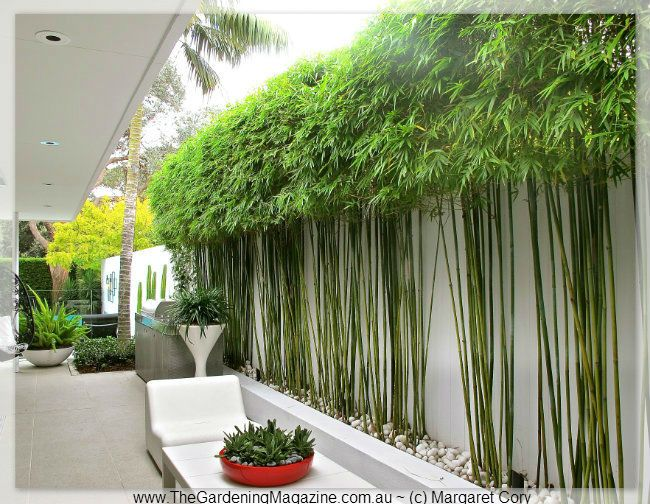 The Gardening Magazine » Blog Archive Hidden Festival Outdoor Design » The Gardening Magazine ~ Love this idea for bamboo!