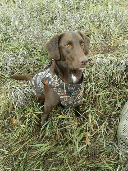 17 Best Images About Hunting Dog Hq On Pinterest Coon