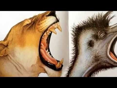 Edward the Emu - YouTube--awesome for opinion lesson