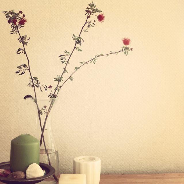 STKさんの、IKEA,NO GREEN NO LIFE,エバーフレッシュ,ネムノキ,植物,植物のある部屋,スピーカーの上,花のある暮らし,花のある生活,棚,のお部屋写真