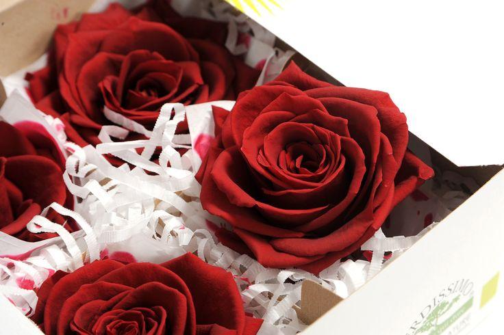rose stabilizzate a lunga durata disponibili in tutte le misure e tanti colori!!
