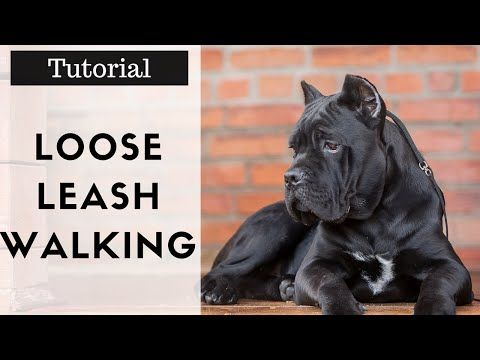 How To Train Your Dog To Walk On A Leash Properly Without Pulling