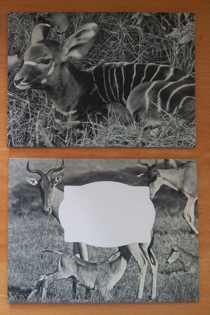 Voorheen behoorde ik tot de dierenencyclopedie Dieren in de wildernis. Als bladzijde…