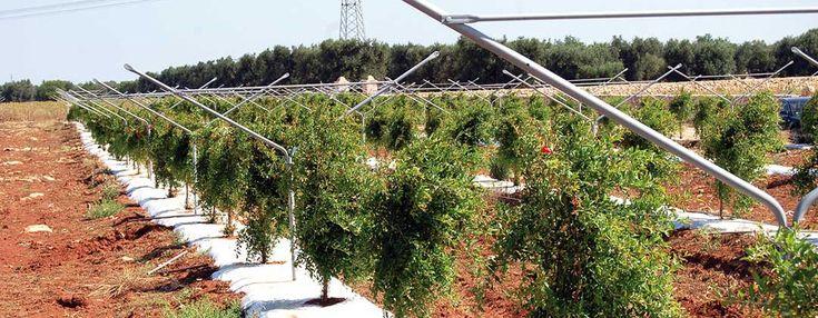 """Quando in agricoltura la tradizione sposa l'innovazione e il design nasce """"YPSILON"""", il primo sistema di sostegno per alberi da frutto economico e funzionale.  www.antoniochittano.it"""