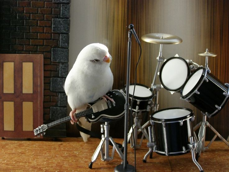Presenting the One Budgie Band ...