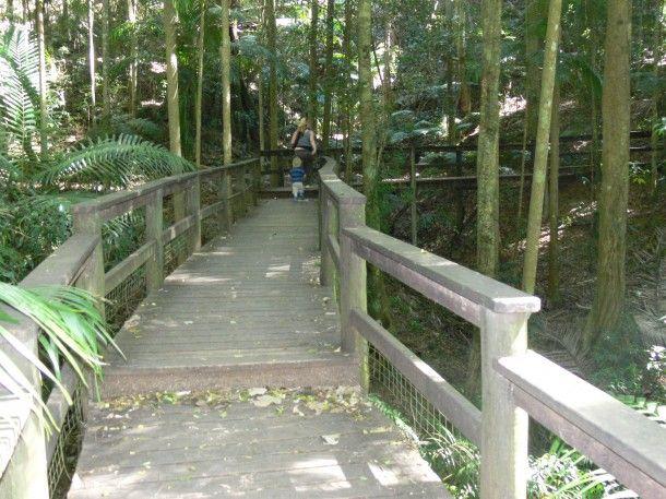 Walking Tracks for Kids   Mount Glorious - Brisbane Kids