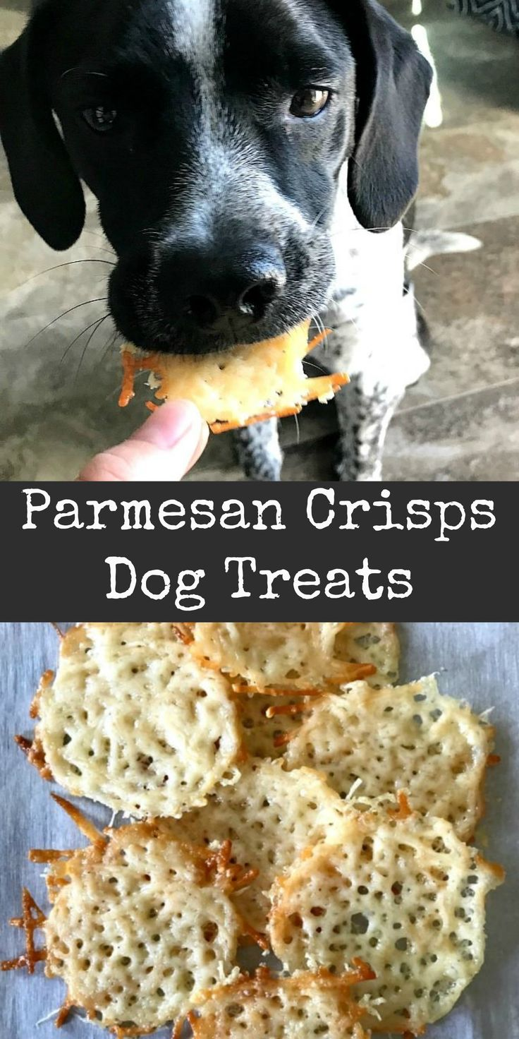These easy to make parmesan crisps dog treats were a huge hit with our dog! These work well as training treats too.