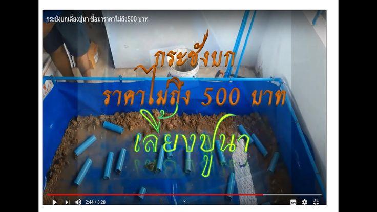 กระช งบกเล ยงป นา ซ อมาราคาไม ถ ง500 บาท Youtube กบ ก ง