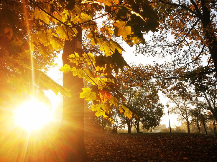 #wagrowiec #wielkopolska #polska #poland #wągrowiec #słońce #jesień #sunrise #autumn Fot. Ł. Cieślak