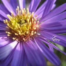 Afbeeldingsresultaat voor bloem geel