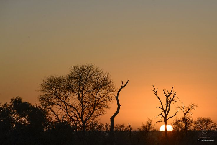 The African bush wakes up...