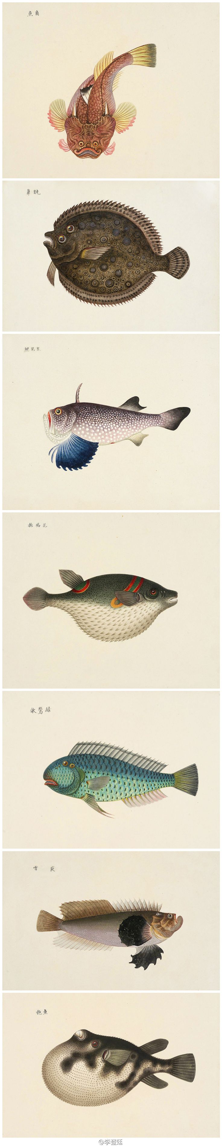 :: Fish :: I've always been especially fond of flounders with their migrating eye... Wonder if these were drawn from life? Study Nature.