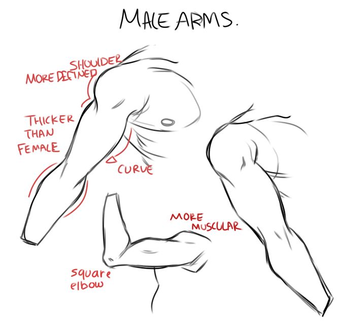 male and female arms