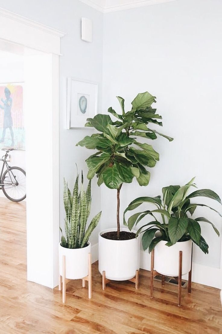 There S Nothing Quite Like An Indoor Plant For Turning A House Into A Home Bringing Life Energy And A Mid Century Modern Planter Plant Decor Wood Plant Stand