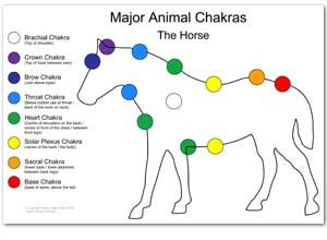 Animal Reiki healing, treatment & classes at NC Reiki Training Center