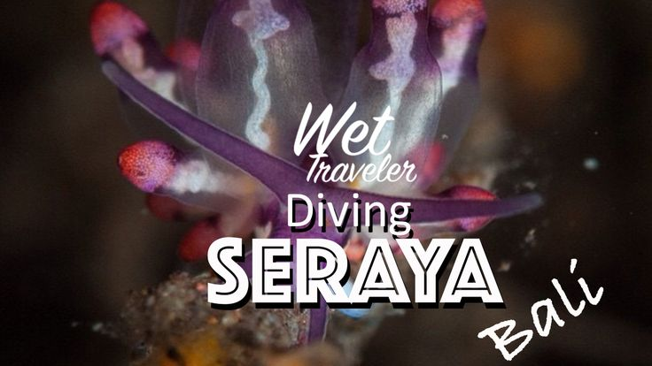Diving in Bali already well known as one of the best in Indonesia. But for more spesific, diving not only seeing fishes or coral. Here in Seraya, located up north Bali, we can find unique crittres.  One of the critters called Harlequin shrimp, get it's name by the look of its body motif to a classic Italian play character named Harlequin.  find our more journey on www.wettraveler.com Enjoy diving Bali  #divingbali #divingindonesia #macrodive
