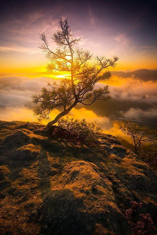 Lonely - Lonely tree and the sunrise. Sächsische Schweiz, october 2013. https://www.facebook.com/mjagiellicz