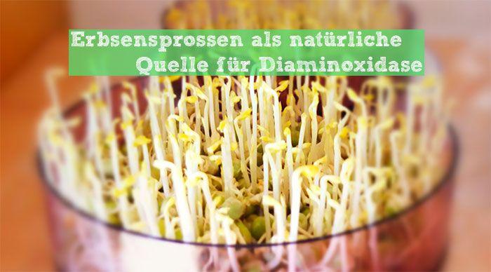 Eine natürliche und zugleich vegane Quelle (verglichen mit DAOsin) für das histaminabbauende Enzym Diaminoxidase, kurz DAO, sind grüne Erbsenspargelsprossen. Was es bei der Aufzucht zu beachten gibt, um möglichst viel DAO zu ernten, erfährst Du auf www.Histaminentzug.de #Histaminintoleranz