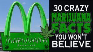 30 Crazy Marijuana Facts You Won't Believe