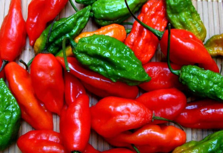 Cooking With Ghost Peppers: 7 Must-Follow Rules - PepperScale