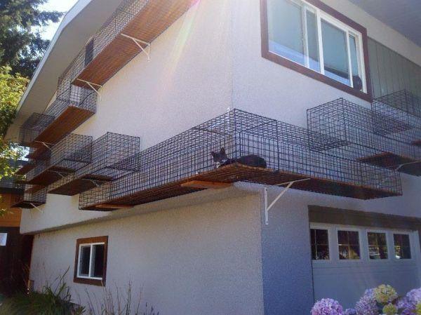 The best cat walkway, ever.