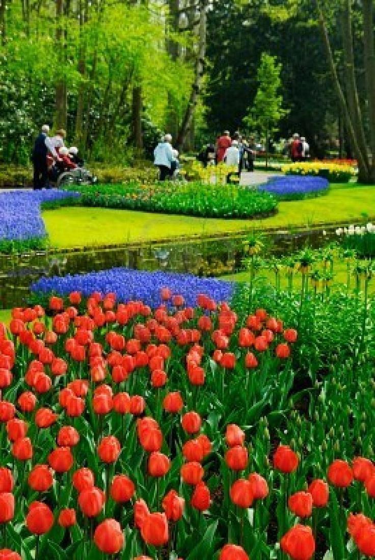 34 best keukenhof images on pinterest   the netherlands, flower