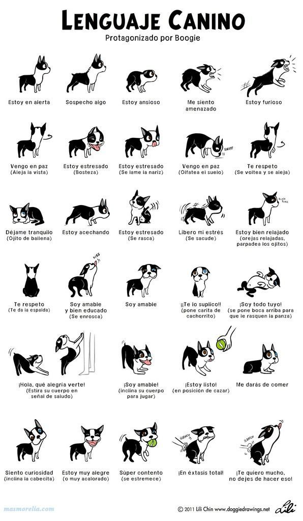 Aprende a interpretar el lenguaje corporal de tu perro [Infografía]