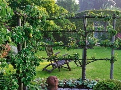 Espalier, not only is it a great word, it is a great technique for fruit trees