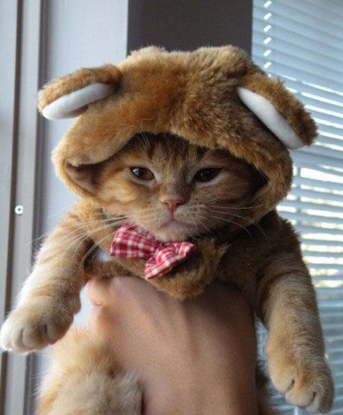 tastefullyoffensive:  Cats Wearing Animal HatsPreviously: Cats Wearing Ties, Dogs Wearing Socks