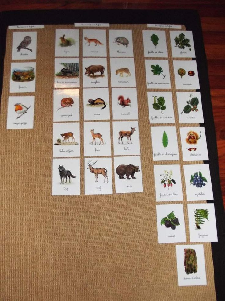 """Après avoir observé la nature au cours de nos balades et ramassé des végétaux, des plumes... J'ai présenté aux enfants les cartes de mon dossier sur la forêt. Avec un travail de classification du """"petit monde de la forêt"""" pour Line : végétaux champignons..."""