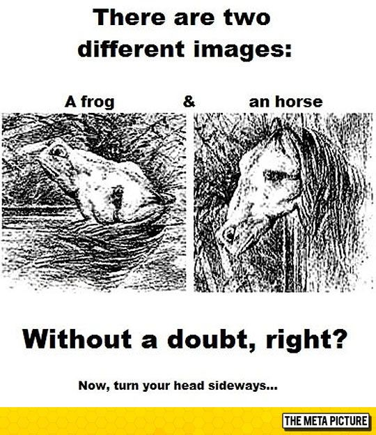 Just A Frog And A Horse, Oh Wait…