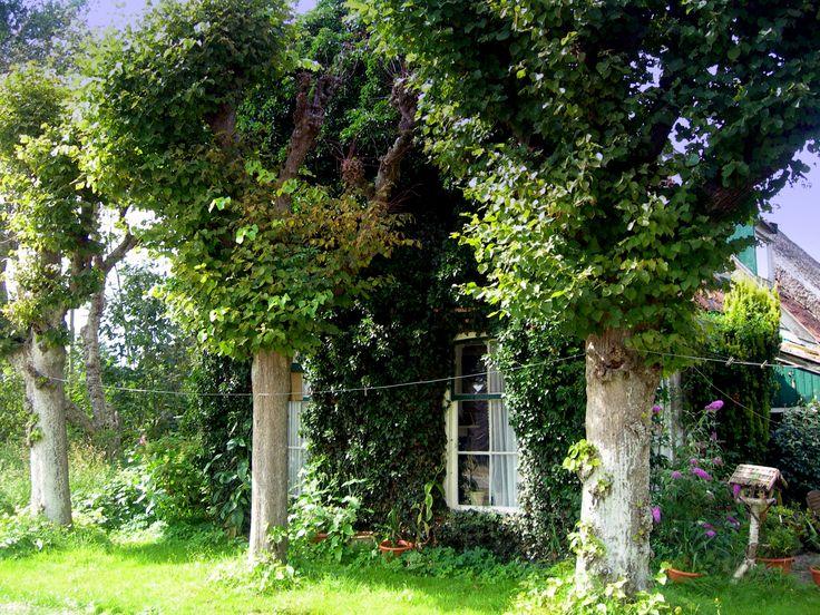 Oude Boerderij achter oude bomen. Burgum The Netherlands