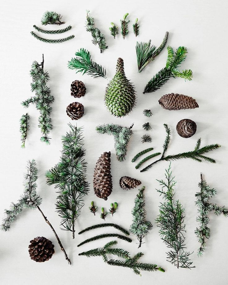 "COUNTRY ROAD,Melbourne, Australia, ""Lush Christmas greenery: fir, pine cones and spruce"", pinned by Ton van der Veer"